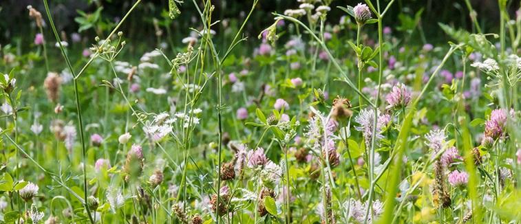 Flowers in a meadow eye allergy