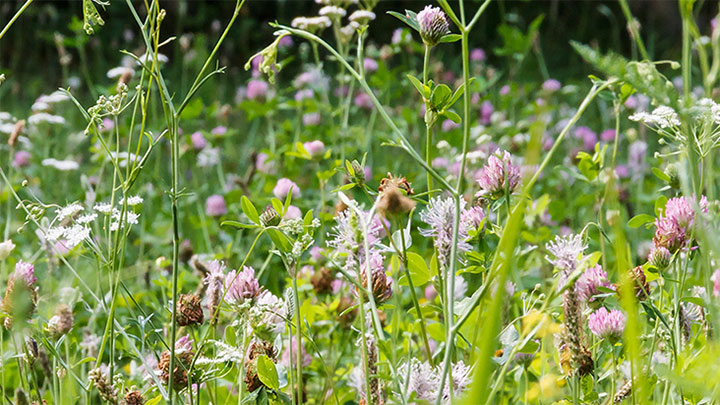 Flowers in a meadow eye allergy blog