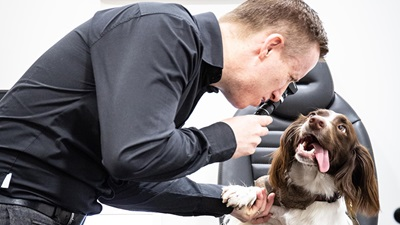 Dog having a sight test