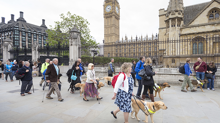 Guide dog protest