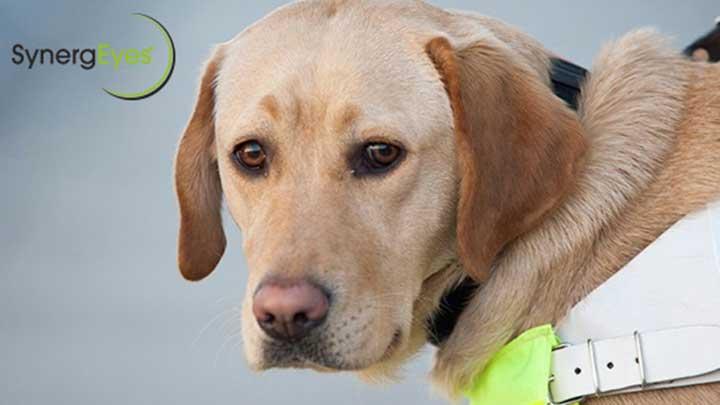 SynergEyes guide dog