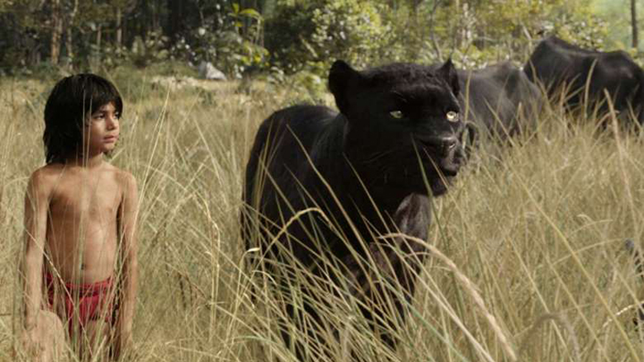 A still from The Jungle Book (2016) movie