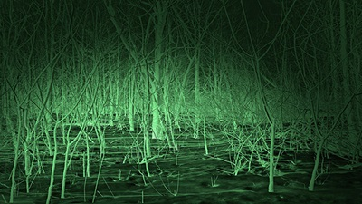 Forest with night vision