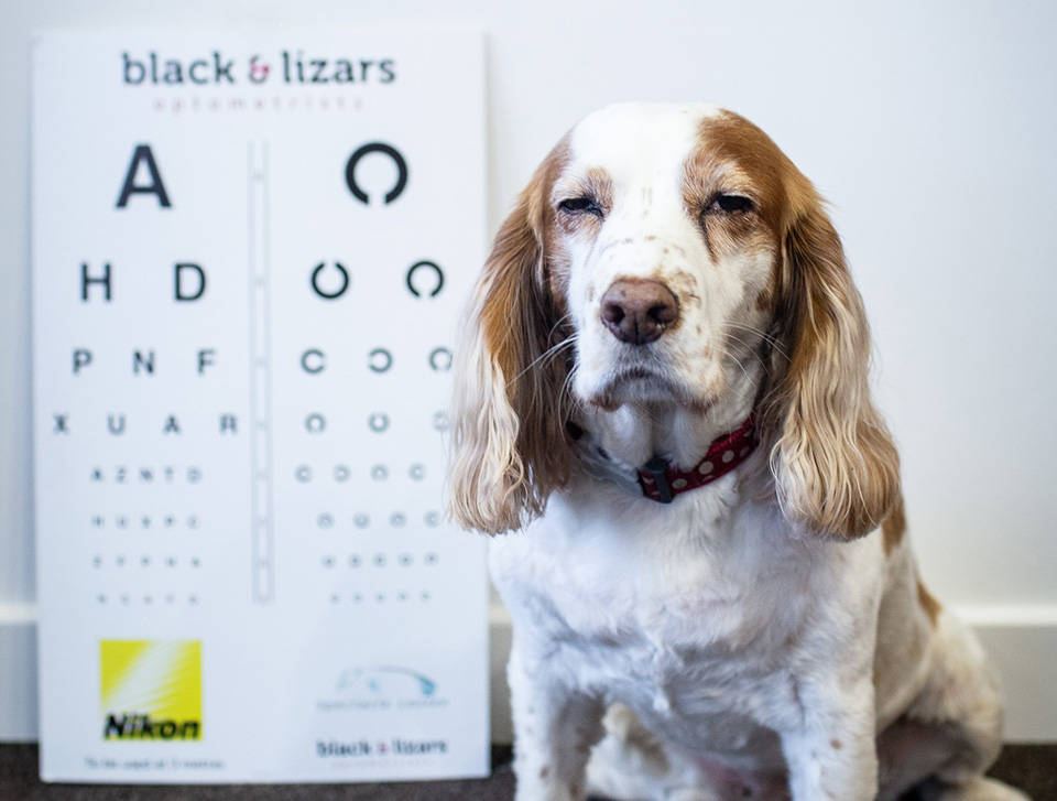 Dog having sight test