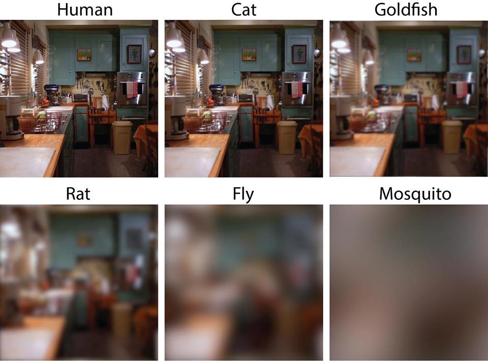 Pets vision