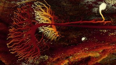 Praying mantis neuron
