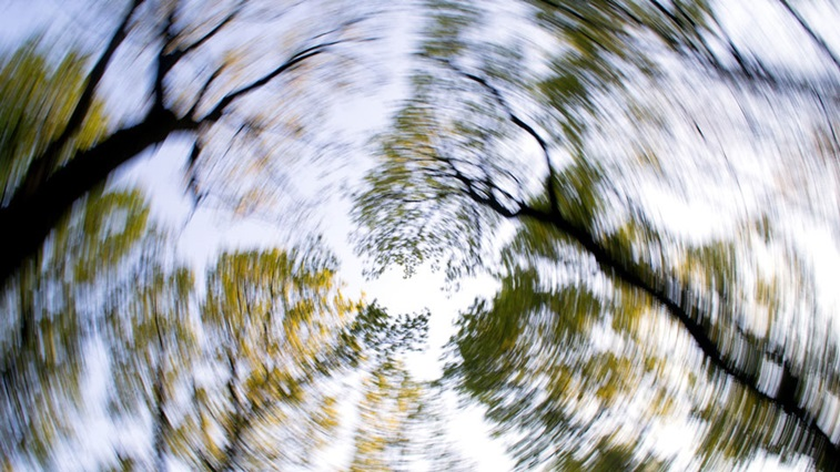 trees spinning