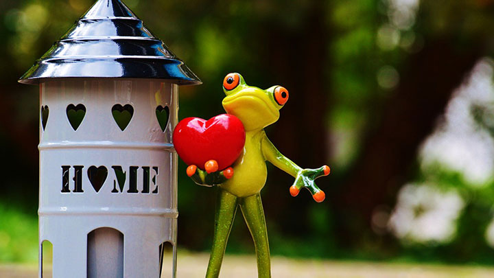 A frog at home